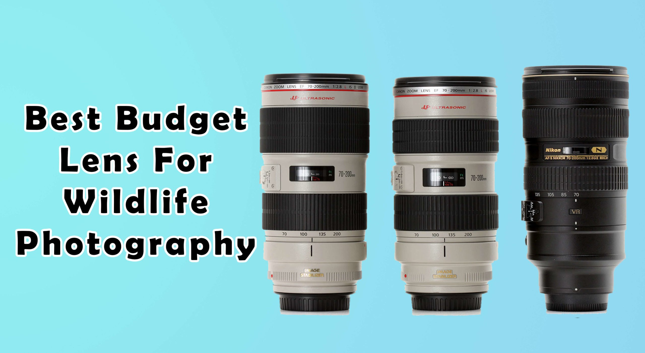 Best-Budget-Lens-For-Wildlife-Photography