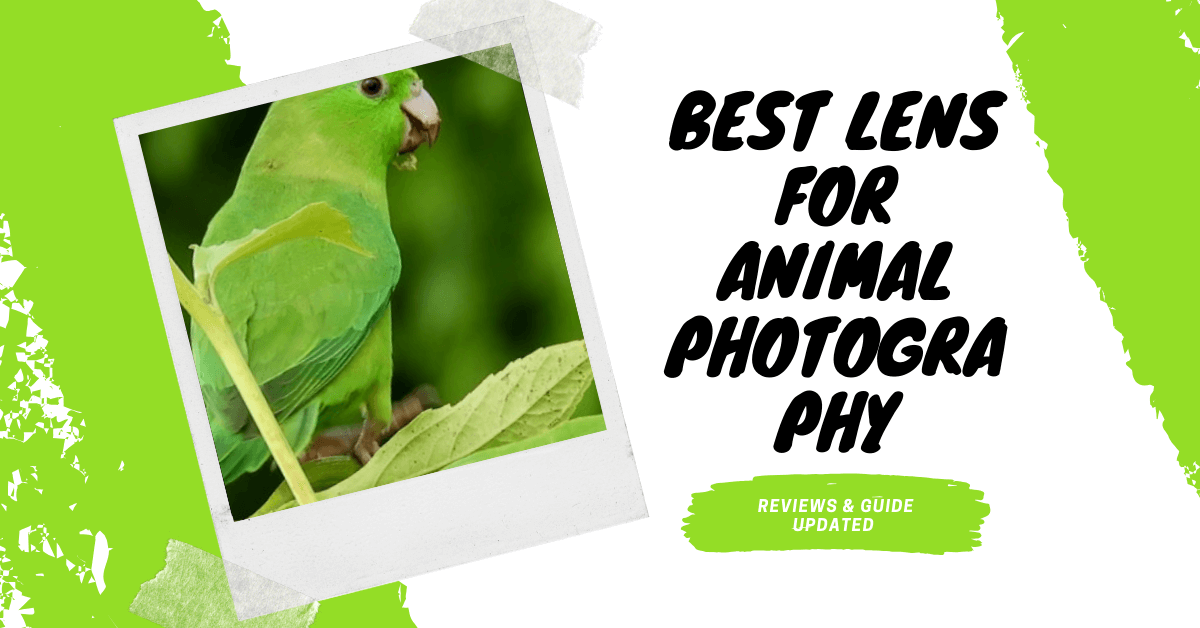 Best-Lens-For-Animal-Photography