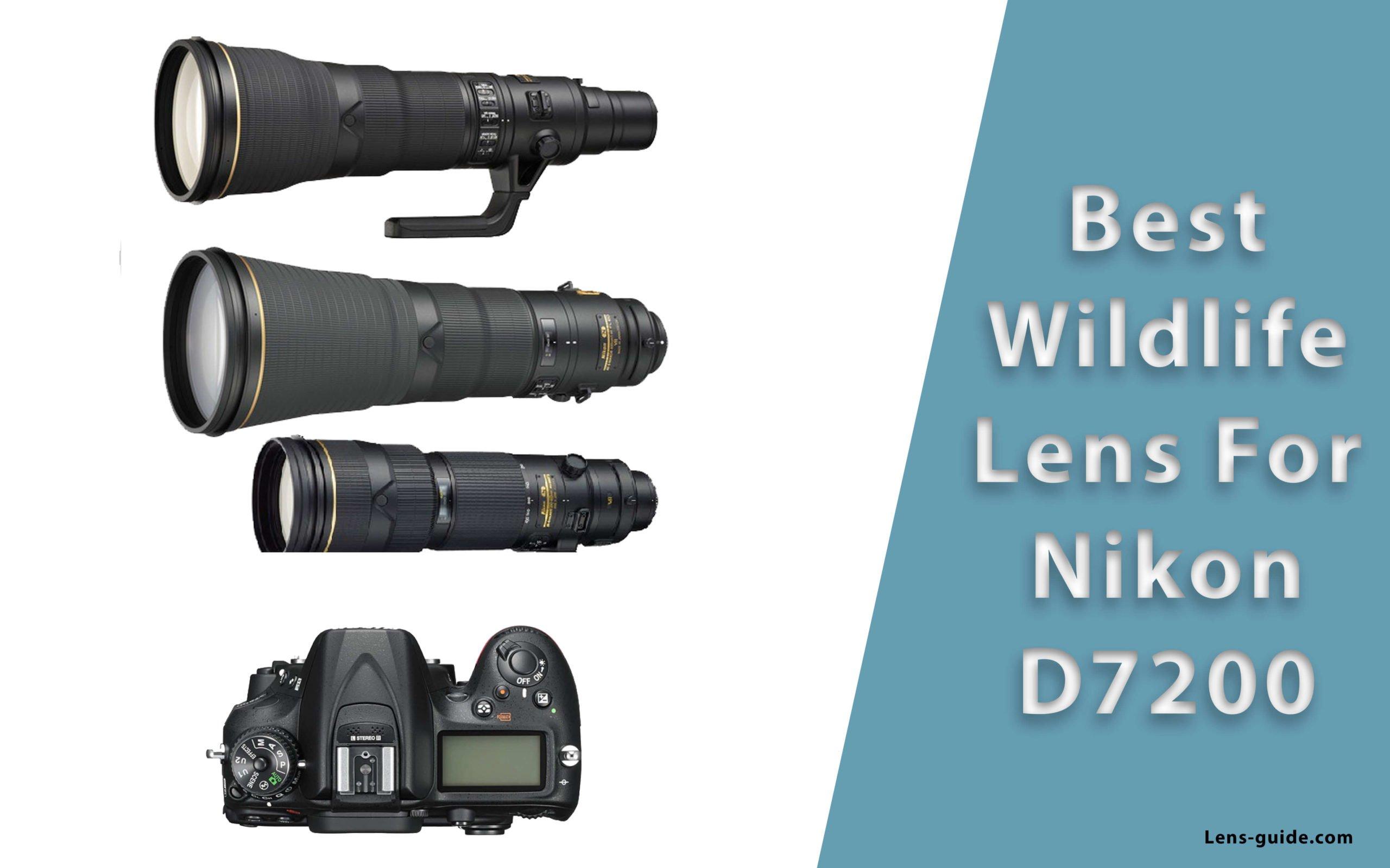 Best-Wildlife-Lens-For-Nikon-D7200-